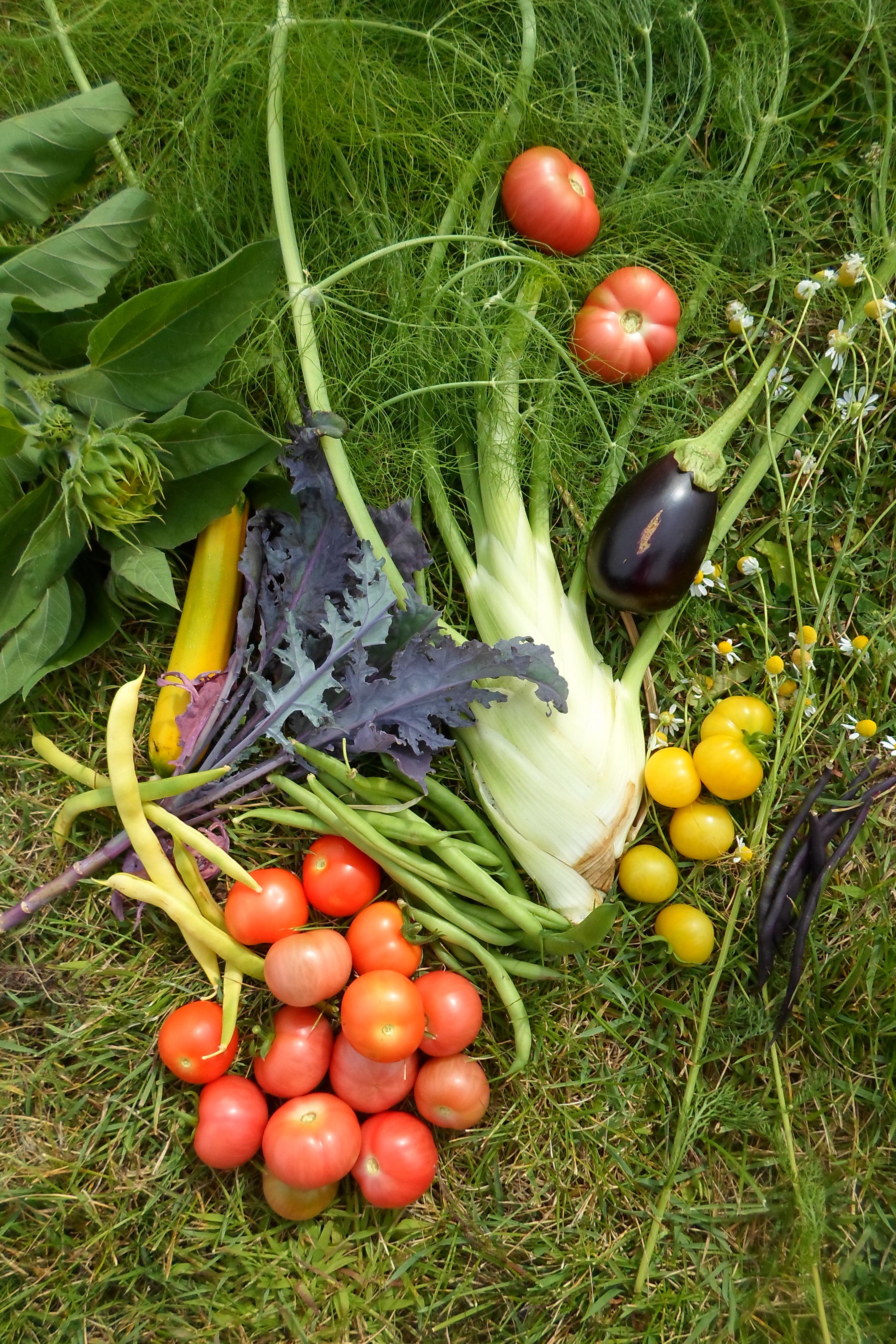 De la bonne graine incroyables comestibles du suro t - Pomme de terre germee comestible ...