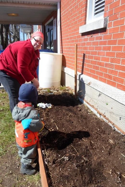 Stéfanie une nouvelle bénévole dont l'aide précieuse est apprécié. En compagnie de ses deux garçons, elle a fait ses premiers semis extérieurs!