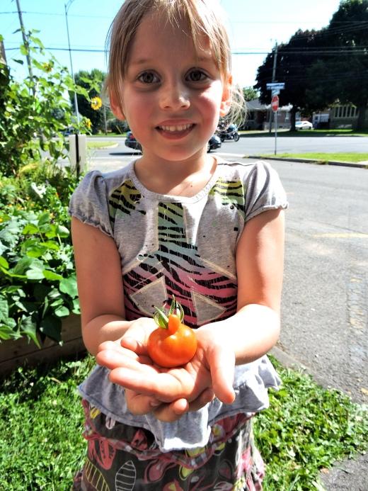 Zoé, une cueilleuse régulière du jardin ,nous montre sa découverte: une petite tomate bossue!
