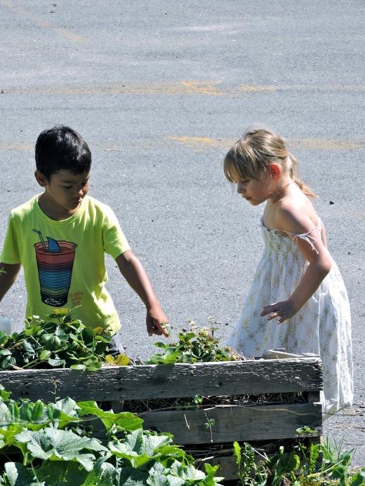 Des enfants découvrent les fraises juste à leur hauteur.