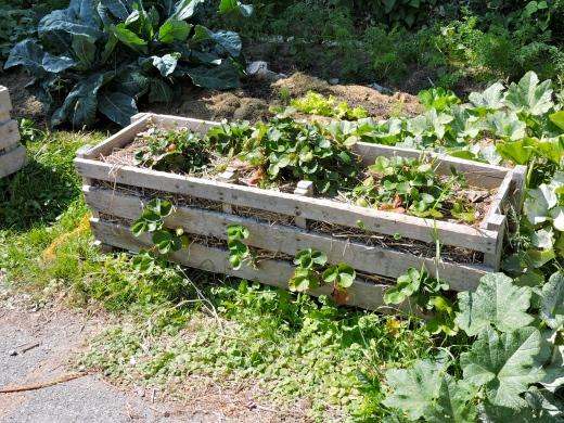 Des bacs de fraises entièrement faits de palettes recyclées! On y glisse des fraisiers par les interstices.