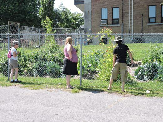 Un potager dans la cour d'école. Celui-ci bénéficie d'un système d'irrigation.