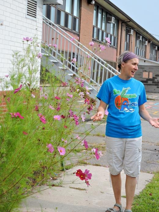 Des parents ont plantés deux fois ce jardinet! On y retrouve une abondance de fraises, de la rhubarbe, des frmaboisiers, de la phacélie et des cosmos.