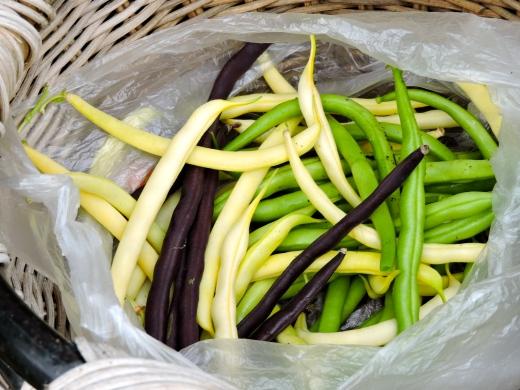 Trois sortes de haricots y sont cultivés. Jaunes et verts sont nains tandis que les violets sont grimpants.