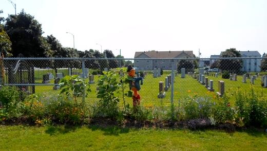 Dans la cour d'école, une plate-bande où poussent une majorité de plantes comestibles, médicinales ou nourricières pour les insectes bénéfiques. Toutes les plantes doivent supporter la grande chaleur et la sécheresse, car elles dépendent de la pluie.