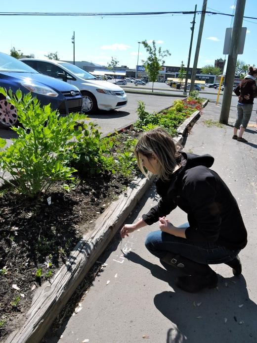 Sur l'asphalte, on peint le nom des plantes comestibles. Ici, la bénévole Alexandra inscrit la livèche, cousine du céleri. Photo par Jasmine Kabuya Racine.