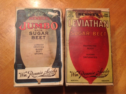 Betteraves à sucre White jumbo et leviathan