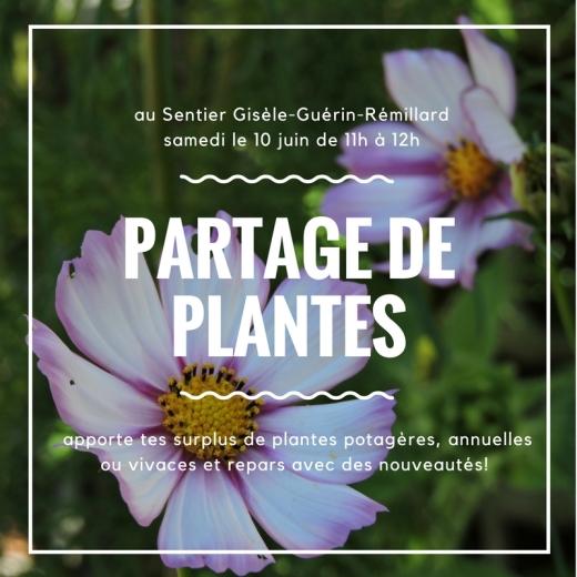 Partage de plantes