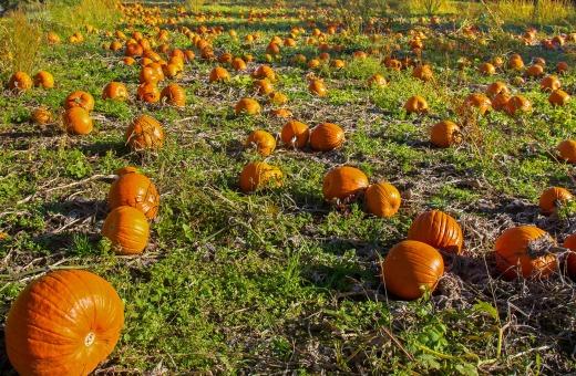 pumpkin-2855490_1920