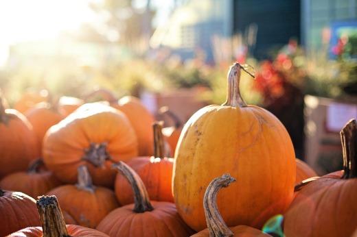 pumpkins-2871269_1920